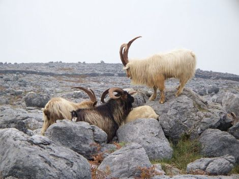 A The Burren (7)