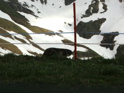 Szwajcaria 363