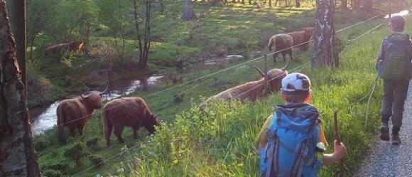 Northern Vosges 001