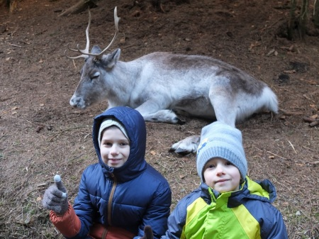 reindeer09